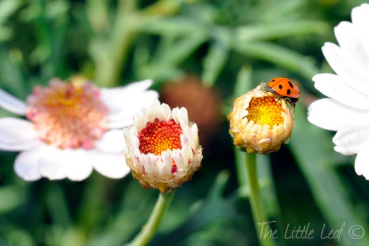 Ladybird and Flower (2) by The Little Leaf