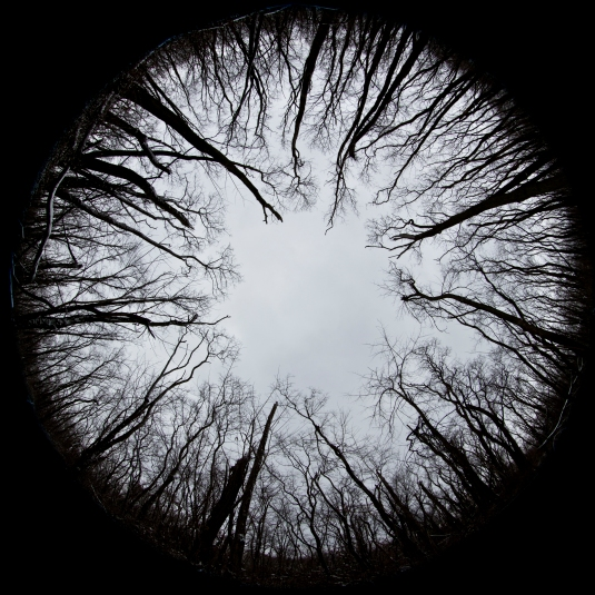 Eye of the Trees by Steve Ullenius, All Rights Reserved