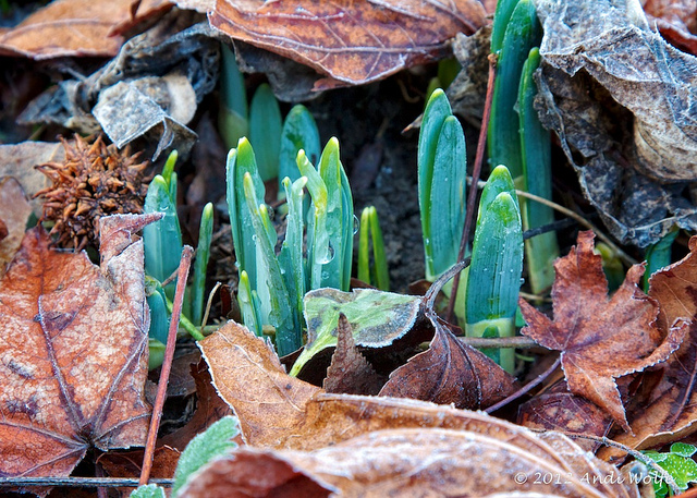 First Sign of Spring by Andi Wolfe