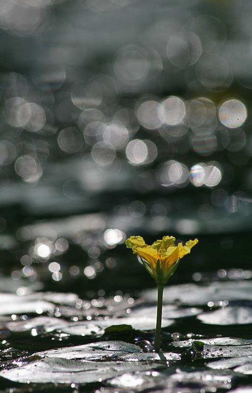 Yellow Floating Heart by Stanislav Shinkarenko