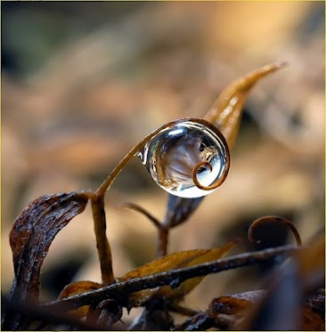 A Single Drop by Amin Baher